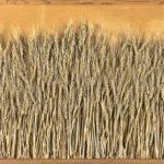 """""""Eleusi – Spighe argentine"""" 1990, assemblaggio, cm. 60x80"""
